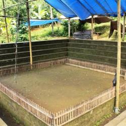 L'arena per i combattimenti dei galli