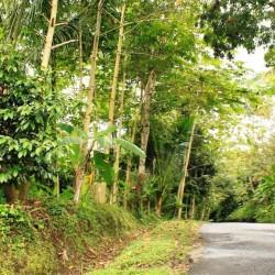La strada nella giungla