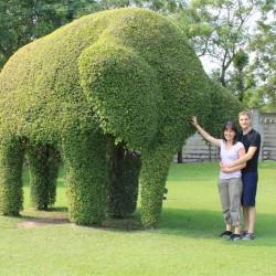 Cespugli a forma di elefante