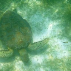 Un'altra tartaruga