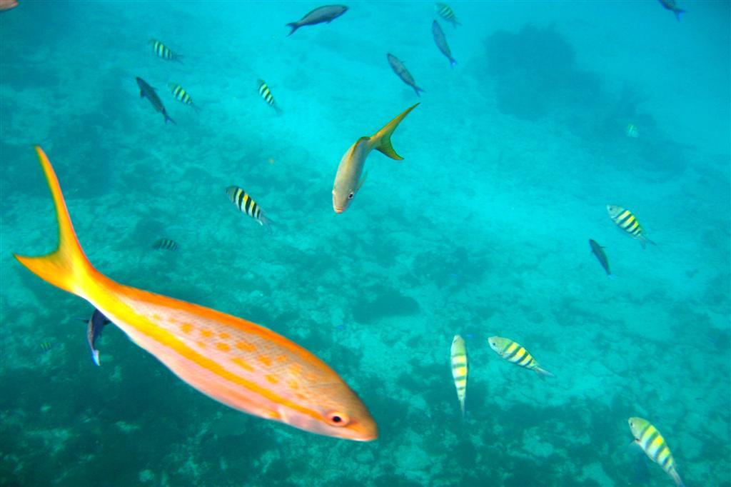 Snorkeling a Los Manchones e El Farito