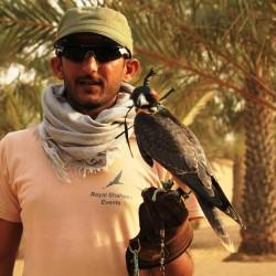 Un falco