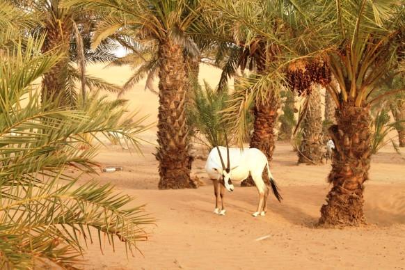 Dubai e serata nel deserto… rovinata dal vento