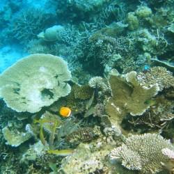 Pesci e coralli