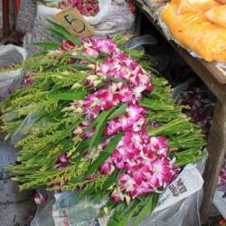 Orchidee e fiori in vendita