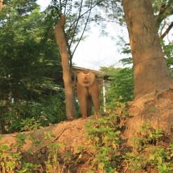 Una scimmietta ci saluta