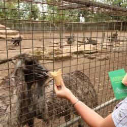 Gli emu