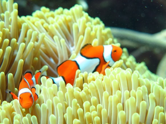 Snorkeling al Great Barrier Reef