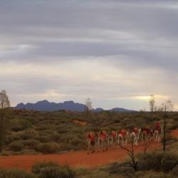 Il Kata Tjuta e i cammelli