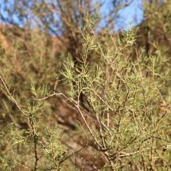 Una pianta medicinale
