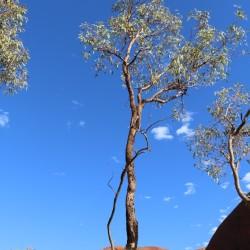 Un'albero dalla corteccia scura