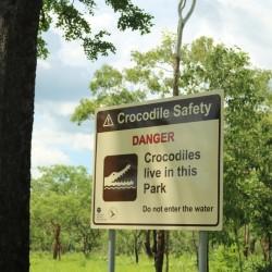 Attenzione ai coccodrilli