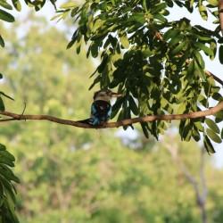 Un altro uccello