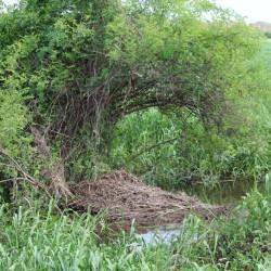 Un nido di coccodrillo